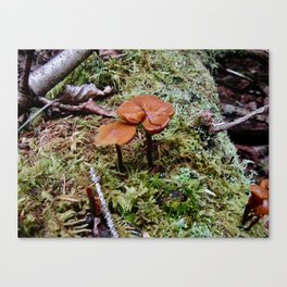 Little Worlds Inside our World Canvas Print