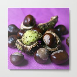 Chestnut - Stillife of Autumn  Metal Print
