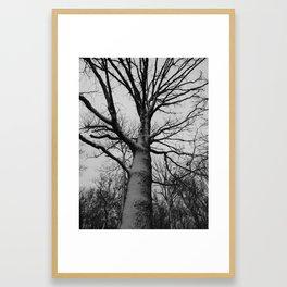 snowy tree Framed Art Print