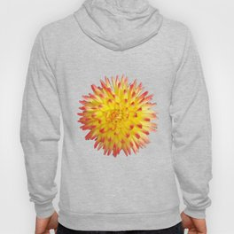 A Yellow Dahlia with Pink tips on a transparent background Hoody