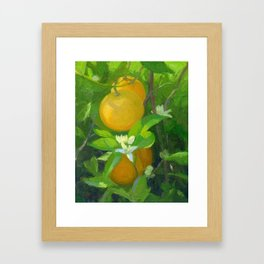 Orange Tree with Oranges and Blossoms Framed Art Print