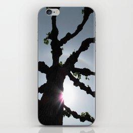 Populus iPhone Skin
