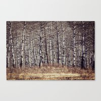 birch Canvas Prints featuring birch by Leanne Taylor Collection
