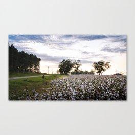 Cotton Field 9 Canvas Print