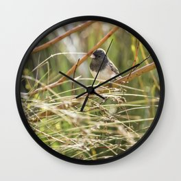 Dark-eyed Junco Sitting Pretty Wall Clock
