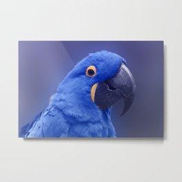 Blue Hyacinth Macaw - Anodorhynchus hyacinthinus - Puohokamoa Hoolawa Maui Hawaii Metal Print