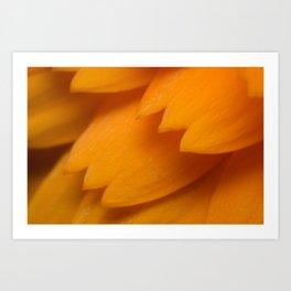 Orange Forever Art Print