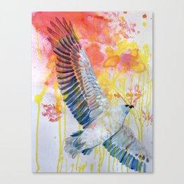 bird art: white bellied sea eagle Canvas Print