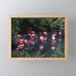 Pink flamingos in a pond Framed Mini Art Print