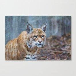Still Bobcat Canvas Print