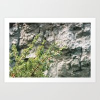 Blue Basin Juniper Art Print