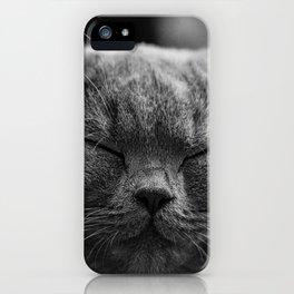 Cat, Cats - Love Cats iPhone Case