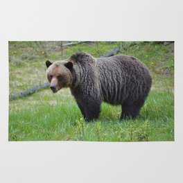 Grizzly encounter in Jasper National Park Rug