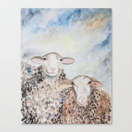 Couple of Sheep Canvas Print
