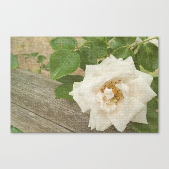 White Elegance Canvas Print
