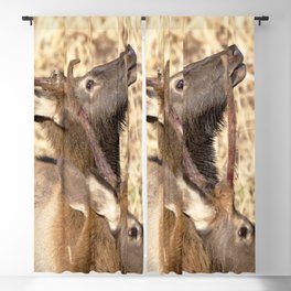 Watercolor Elk Juvenile 14, High-brow Blackout Curtain