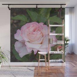 Pink Blush Rose Wall Mural