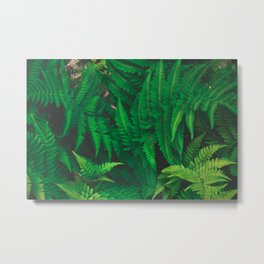 Jungle in the garden Metal Print