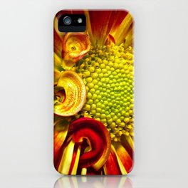 Gerbera Daisy 3 iPhone Case