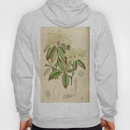Rhododendron keiskei 136 8300 Hoody