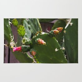 Summer Cactus in Flower Rug