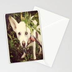 Looking Lobo Stationery Cards