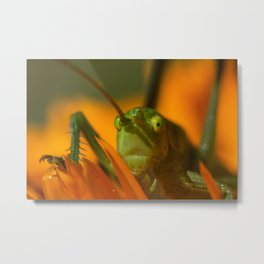 what are you looking for Metal Print