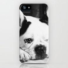 French Bulldog iPhone (5, 5s) Slim Case
