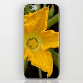 Courgette / zucchini flower iPhone Skin