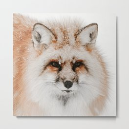 Red Fox Photo | Wildlife Photography | Red Fox In The Snow Metal Print