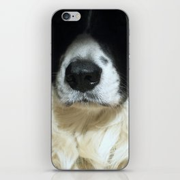 Dog close up iPhone Skin