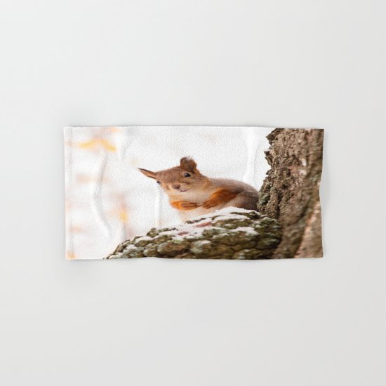 Squirrel in first snow Hand & Bath Towel