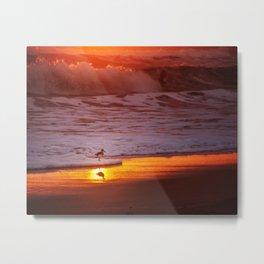 Sunny Sandpiper Metal Print