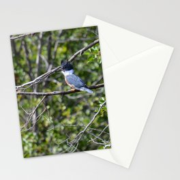 Bad Hair Day! Stationery Cards
