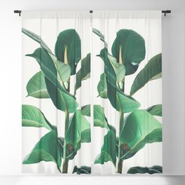 Rubber Fig Blackout Curtain