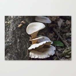 Fungi on a tree Canvas Print
