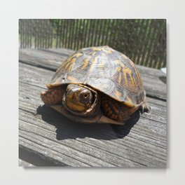The Turtle That Crashed Our Picnic Metal Print
