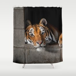 Cincinnati in His Den Shower Curtain