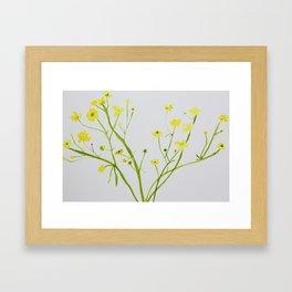 Icelandic Buttercup Framed Art Print