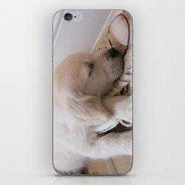 Puppy Sleeping on Converse iPhone Skin
