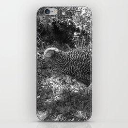 Speckled hen on grass iPhone Skin