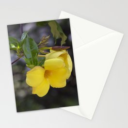 Longwood Gardens - Spring Series 204 Stationery Cards