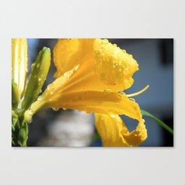 Yellow Garden Flower Canvas Print