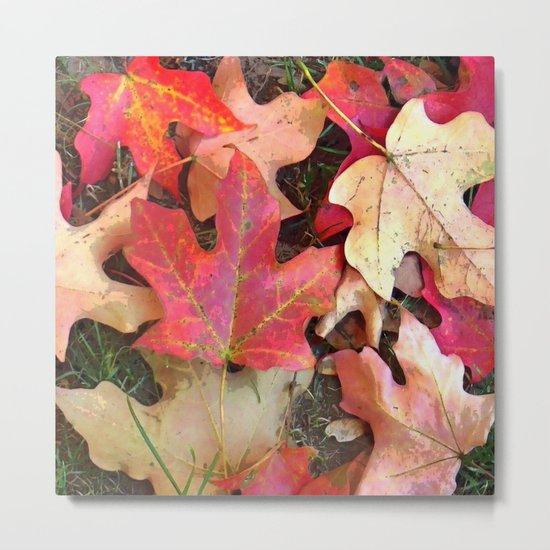 Maple Leaves in Fall Metal Print