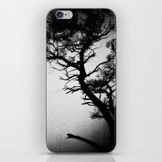 Tree in the fog iPhone & iPod Skin