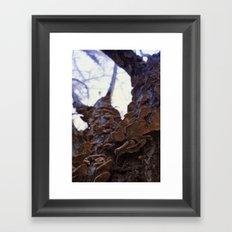 Fungi on the apricot tree Framed Art Print
