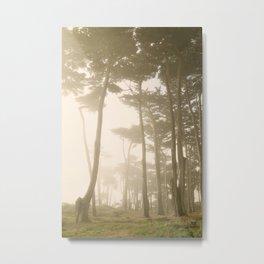 Fairy Forest, San Francisco Metal Print