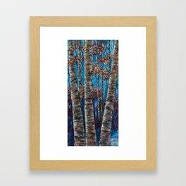 Aspen Forest In The Rocky Mountain Framed Art Print