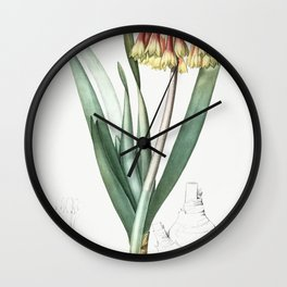 Knysna lily  from Les liliacees (1805) by Pierre-Joseph Redoute Wall Clock