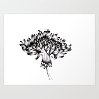dandelion Art Prints featuring Dandelion by ECMazur